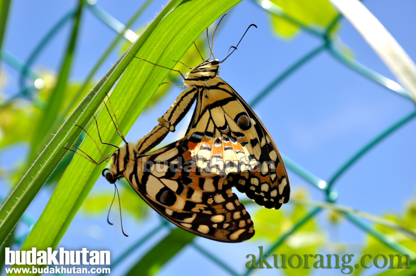 Koleksi Gambar Fauna