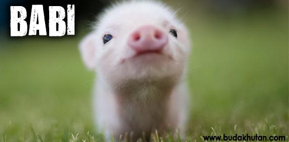 babi-dna-babi